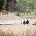 Where is Lambing Live 2014 being filmed?