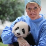 Operation Wild: BBC Documentary to be Hosted by Clare Balding and Vet Steve Leonard