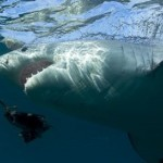 'Great White Serial Killer': Discovery Channel Shark Week Documentary Preview